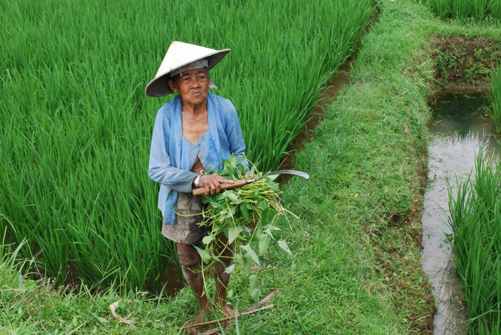 Field worker in Bali