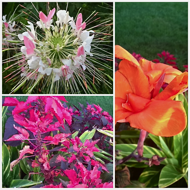 Photo collage from Boston Public Garden