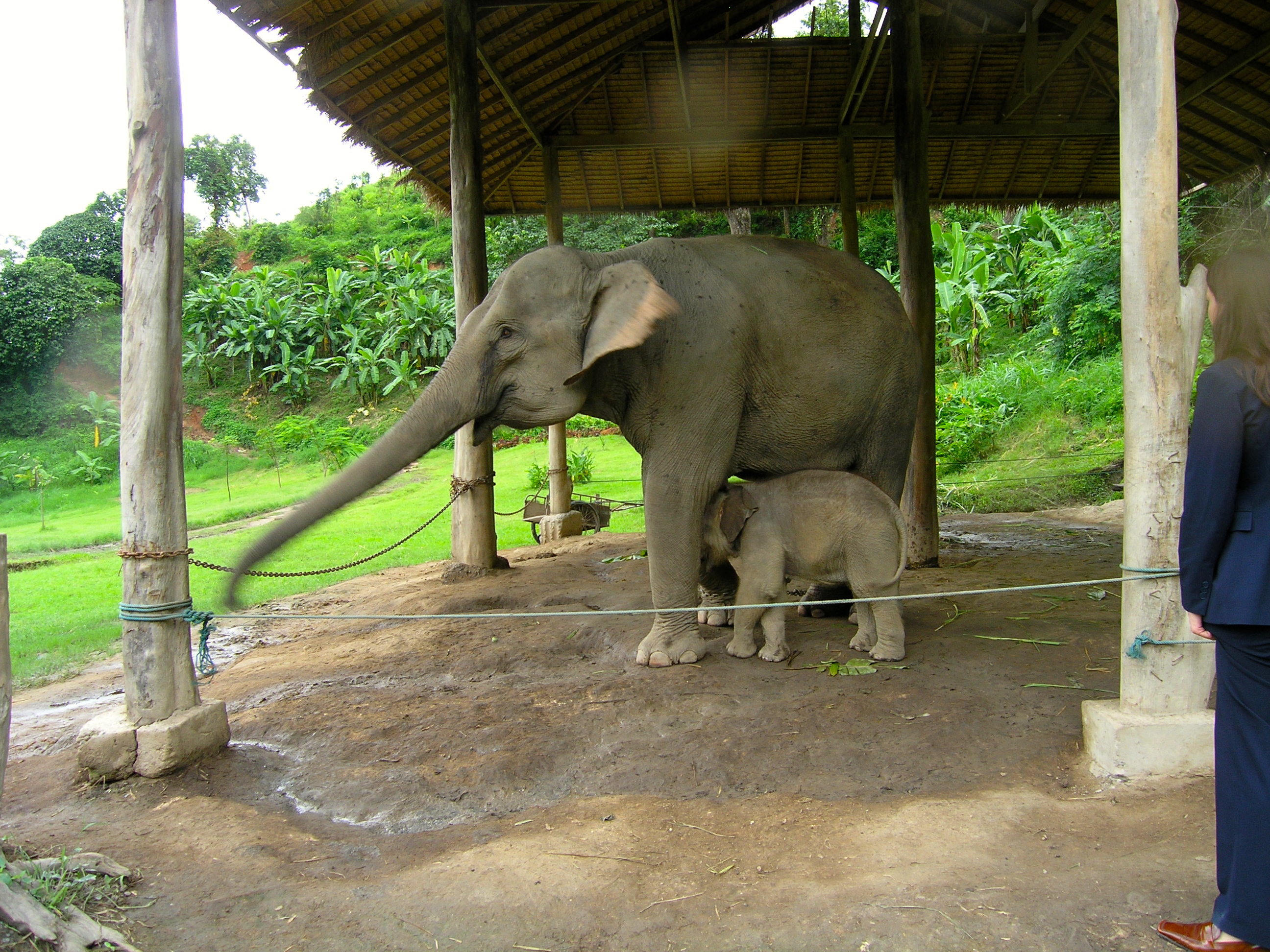 Elephant renewal station in Thailand