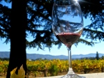 Glass of wine in front of fields in Napa Valley