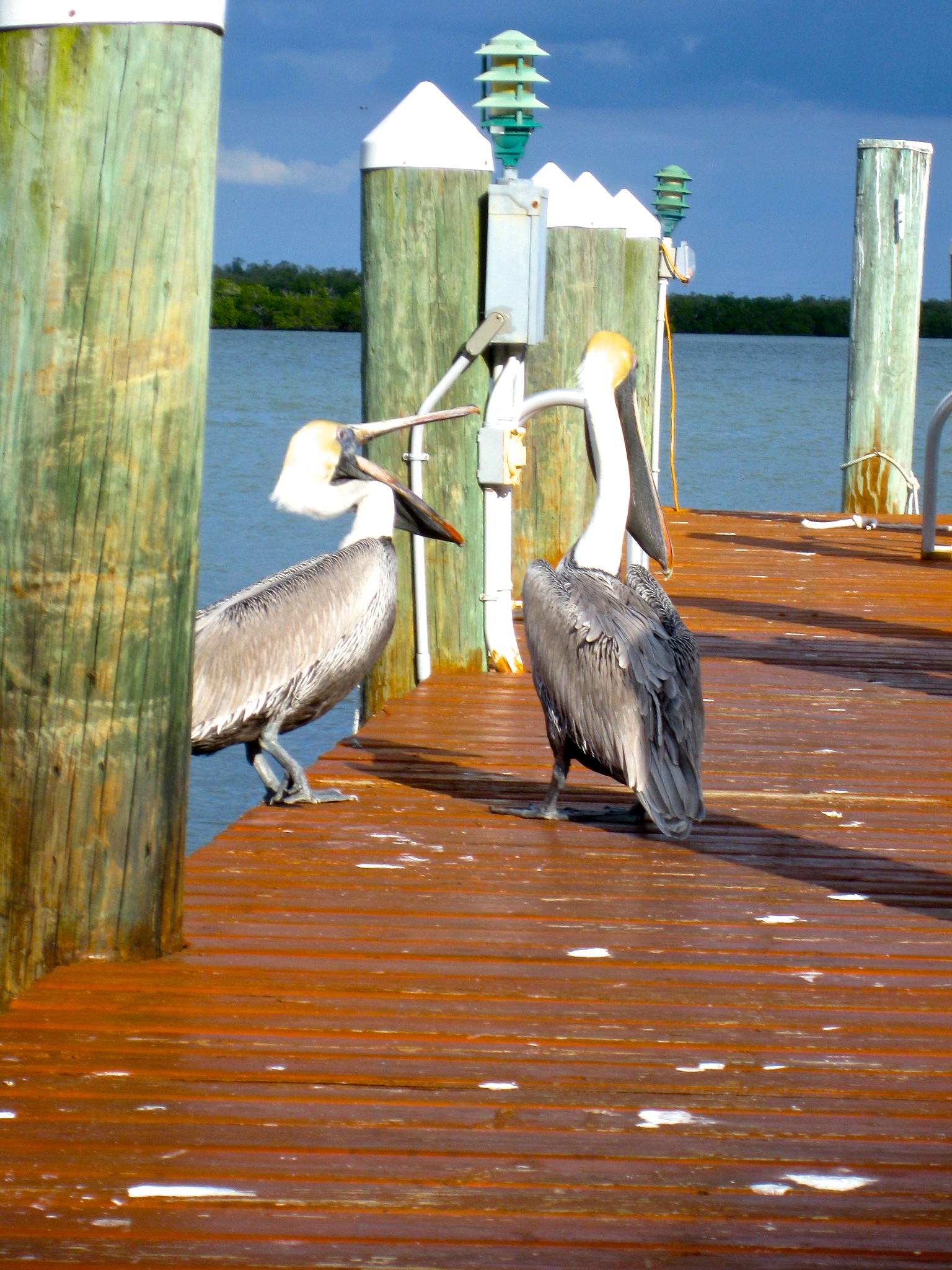 Two pelicans on a pier