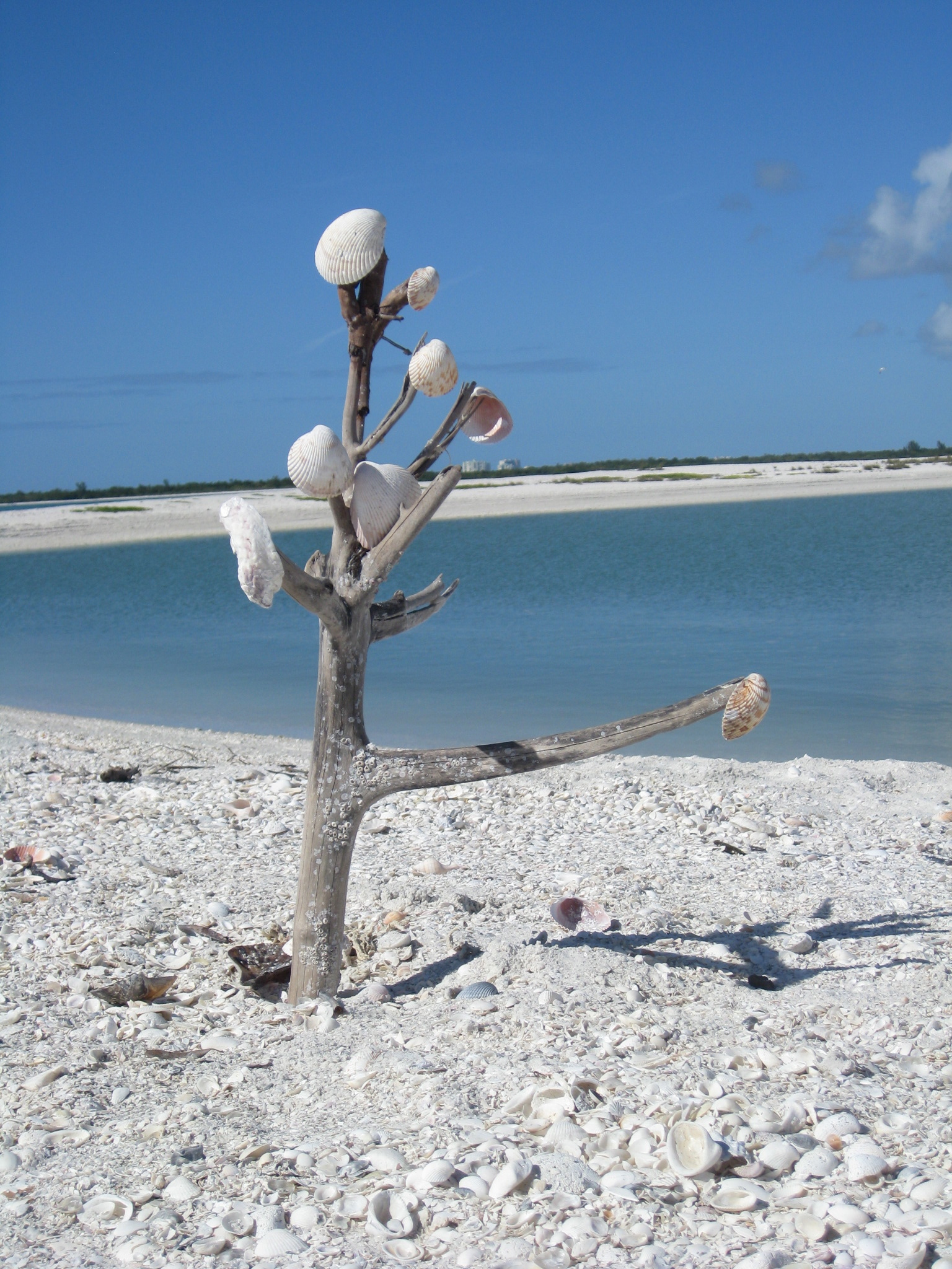 Sea shell tree on beach