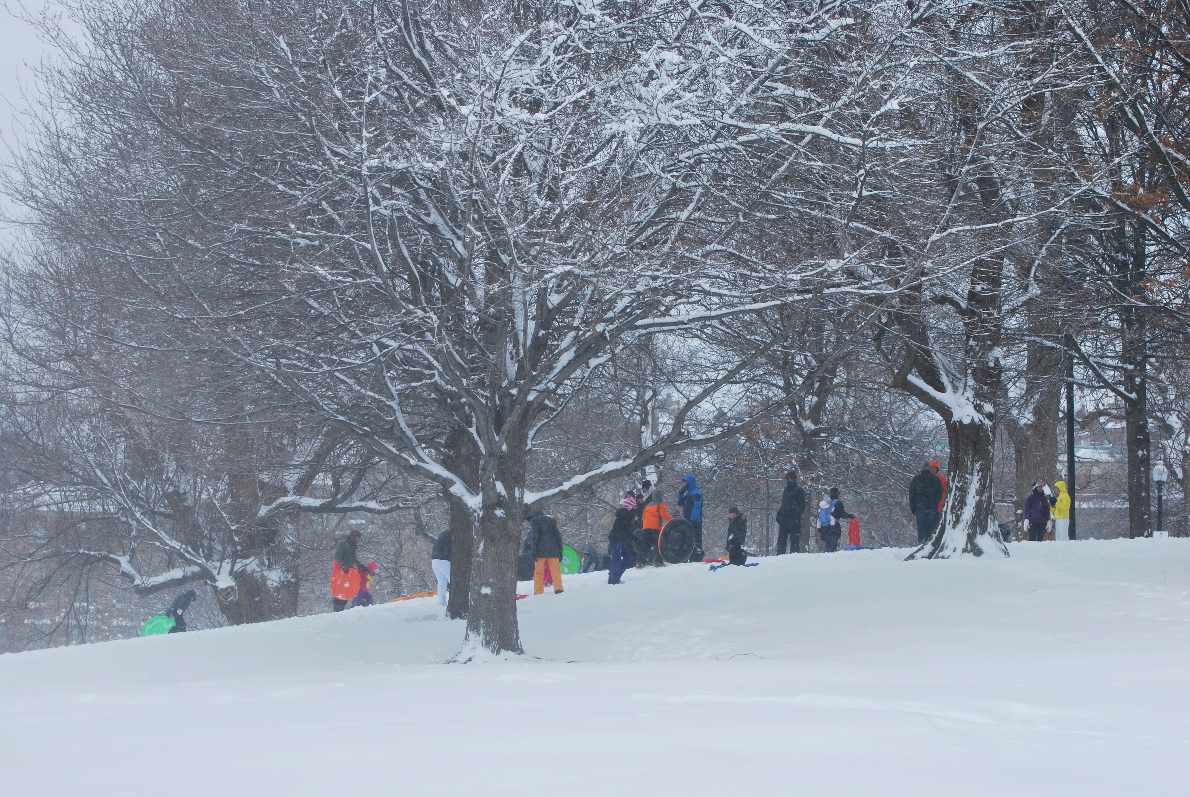 Kids sledding in Boston Common
