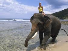 Woman riding elephant in ocean