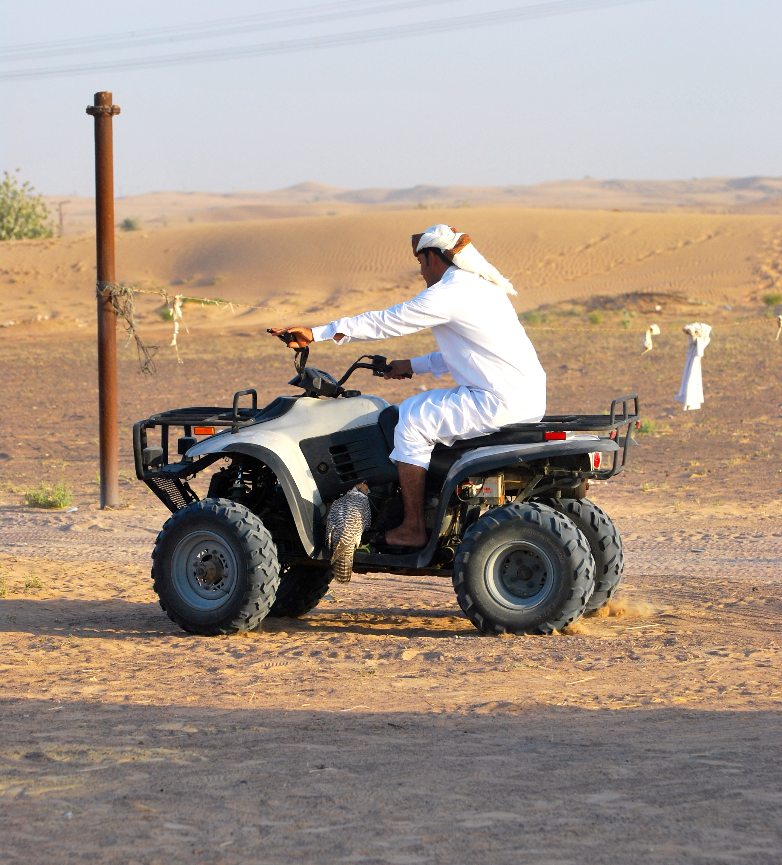 Man riding quad in desert with a falcon on the sideboard