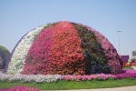 A dome of petunias in the Dubai Miracle Garden
