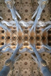 Ceiling in La Sagrada Familia, Barcelona