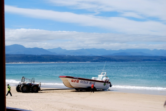 Ocean Safaris, Plettenberg Bay, South Africa