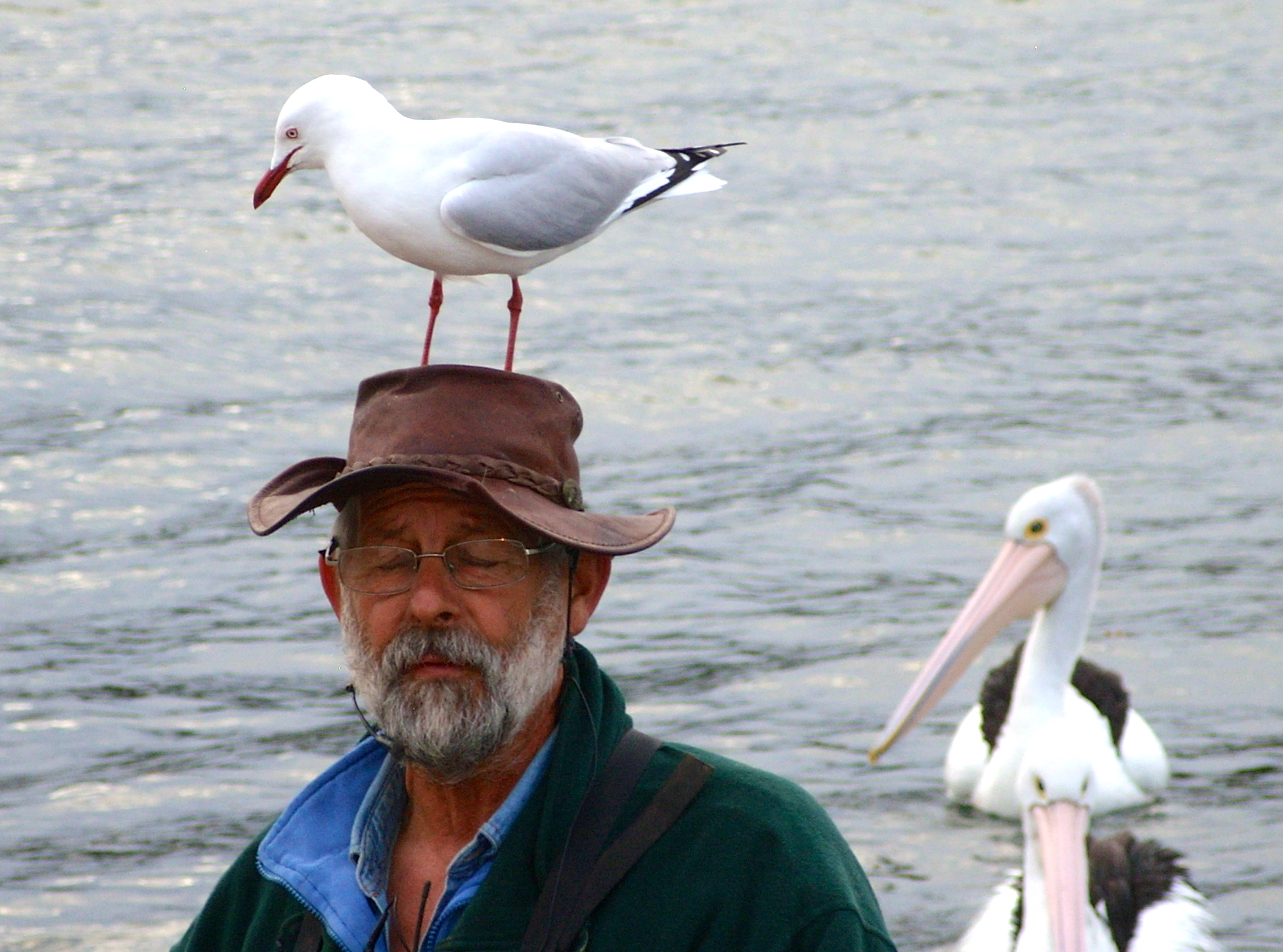 ding man on Kangaroo Island, Australia
