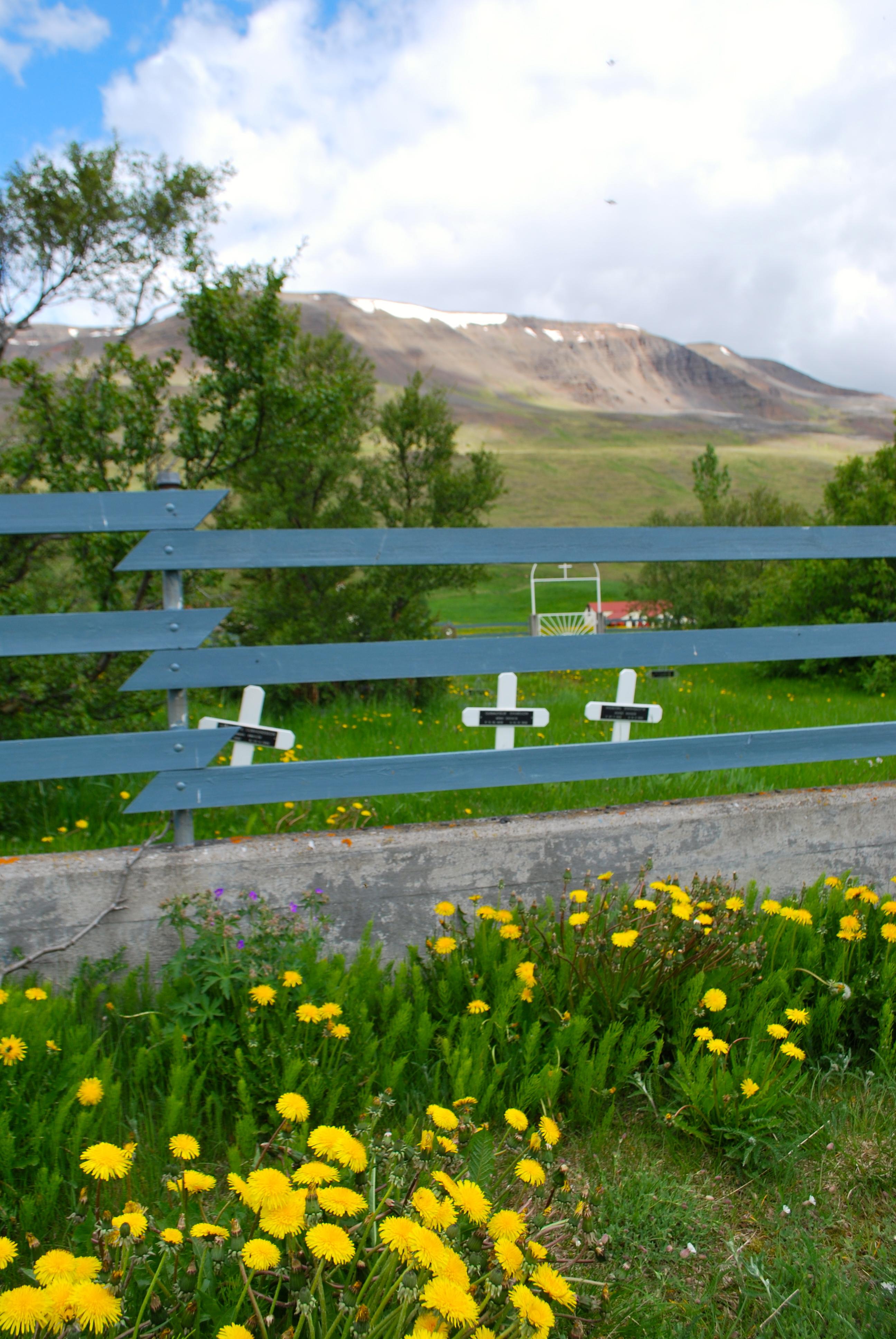 Rural scene in Iceland