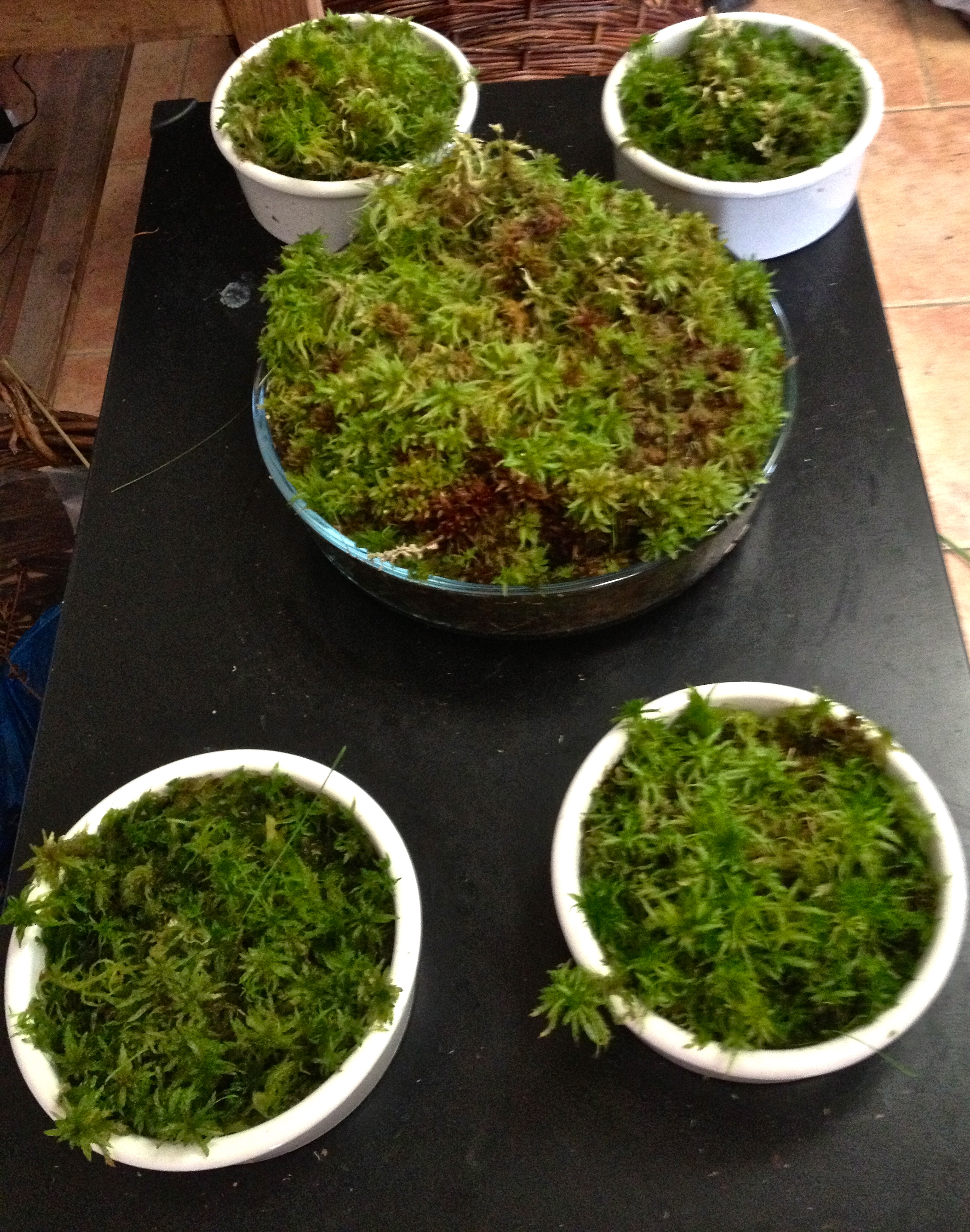 Different types of sphagnum moss from a bog in Ireland