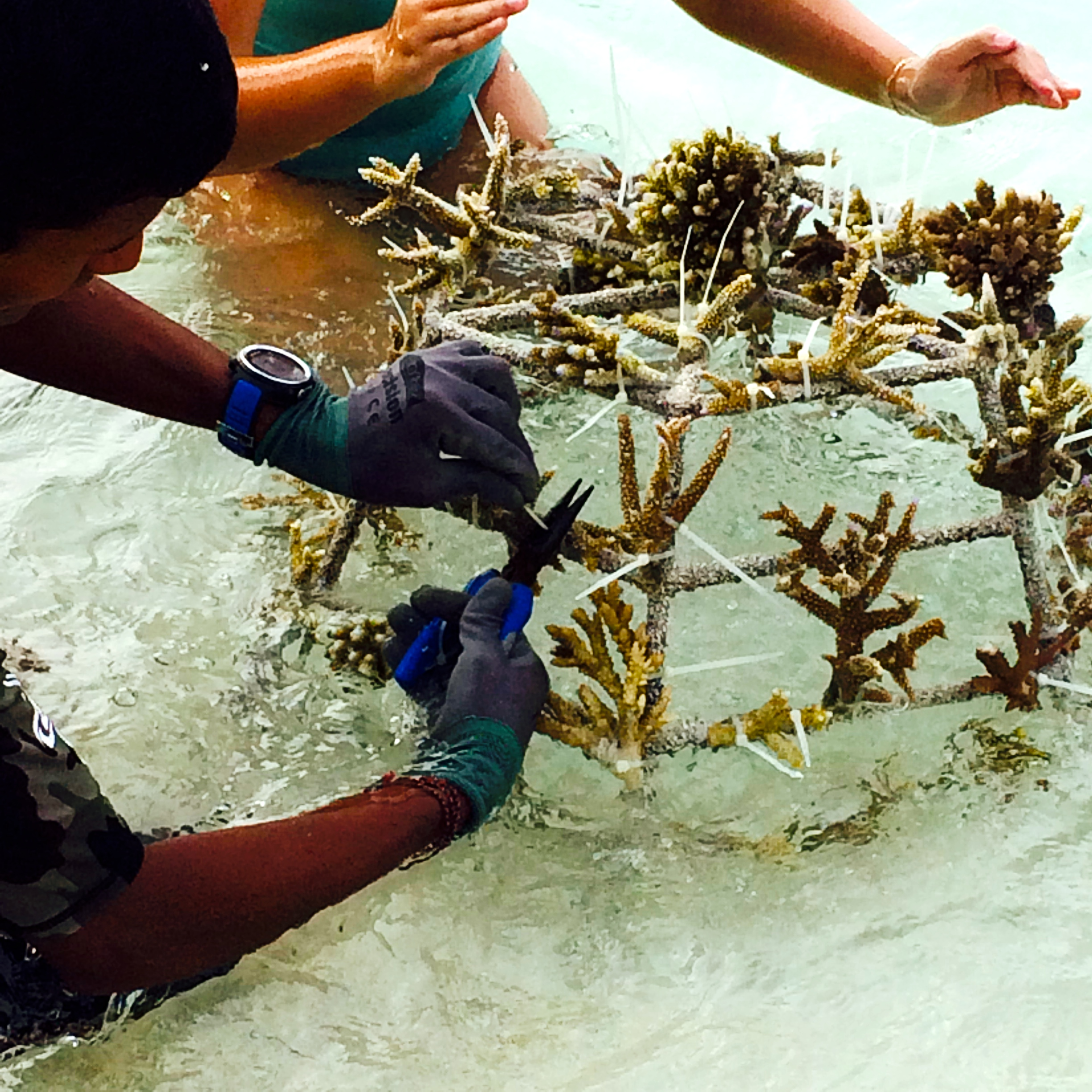 Basket of coral to be used to create an artificial reef