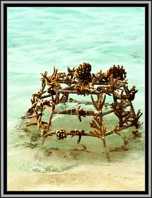 Artificial reef in the Maldives