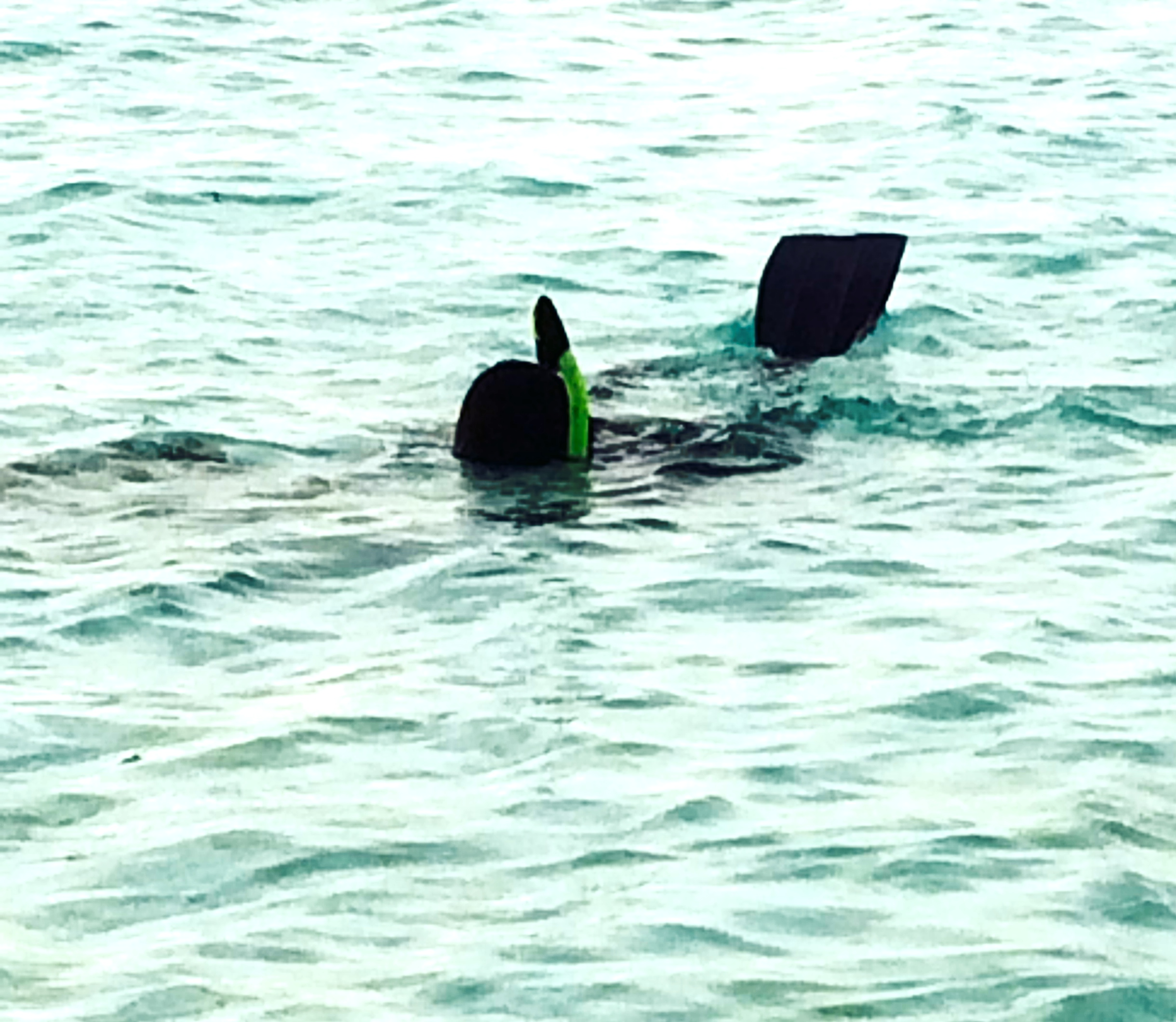 Mady planting the new artificial reef