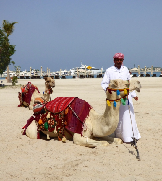 Camel with Bedouin man
