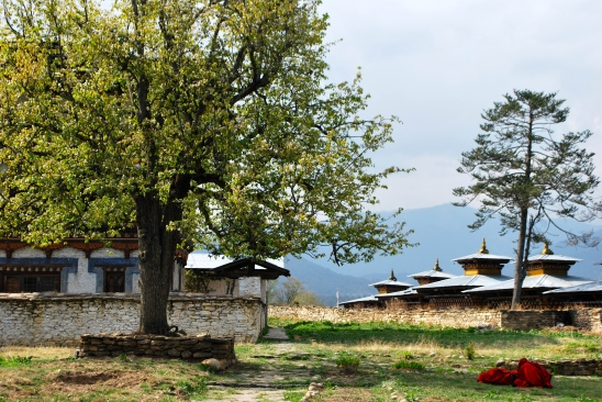 Second king of Bhutan's pear tree