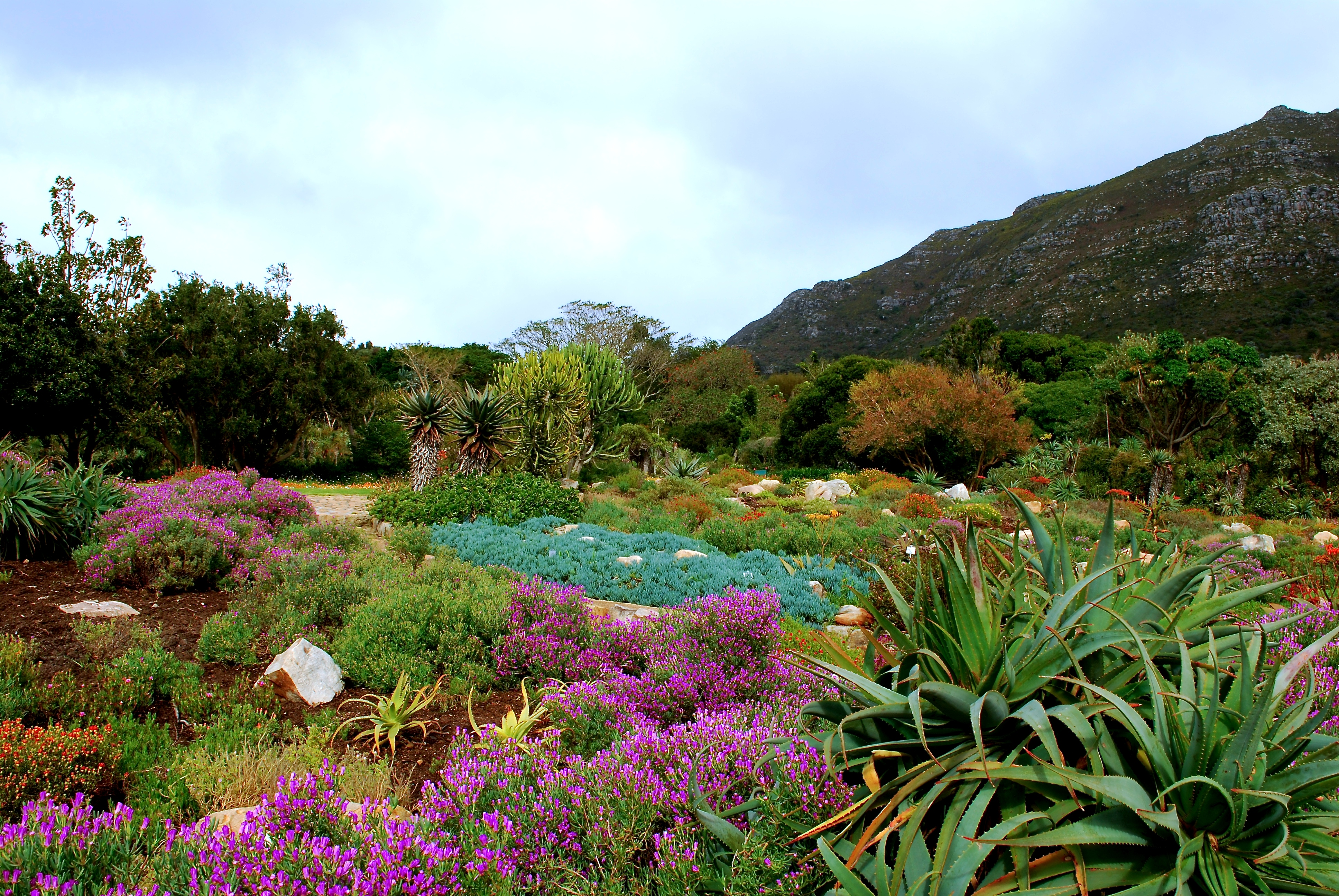 Three continents three spectacular botanical gardens for Jardin kirstenbosch